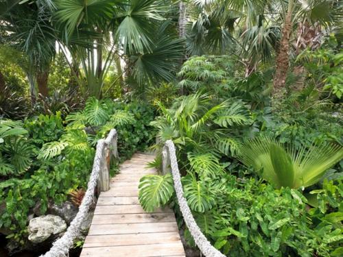 Schattengarten mit tropischen Pflanzen gestalten brücke holz