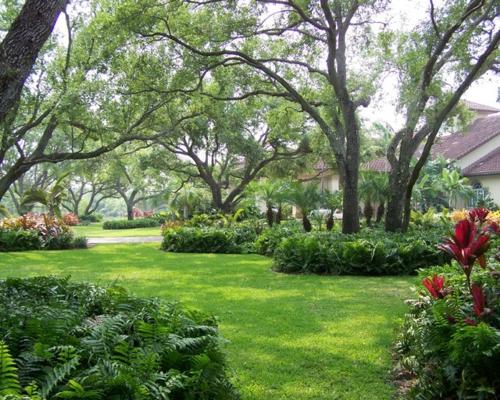 Schattengarten mit tropischen Pflanzen gestalten sträucher