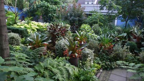 Schattengarten mit tropischen Pflanzen gestalten vielfalt pflanzenarten