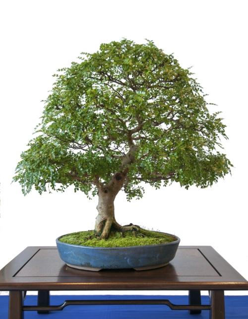 der bonsai baum im interior design eine kunst verwurzelt in harmonie. Black Bedroom Furniture Sets. Home Design Ideas