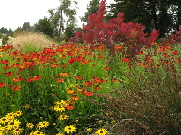 eine tolle zierpflanze in gelb und orange