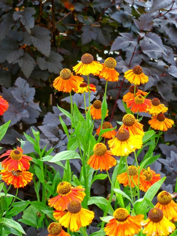 eine tolle zierpflanze kontrastiert zu den dunklen blättern