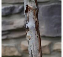 Großartige Pflanze für Ihren Garten: Physocarpus