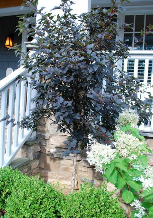 großartige pflanze für ihren garten direkt vor der veranda
