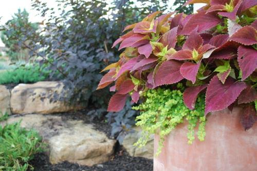 großartige-pflanze-für-ihren-garten-für-kontrast