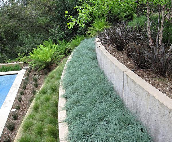 modernes landschaftsbau design terrassiert mit farnen