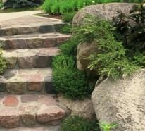Thymian im Garten – die schmackhafte Schönheit, die Sie gesund macht