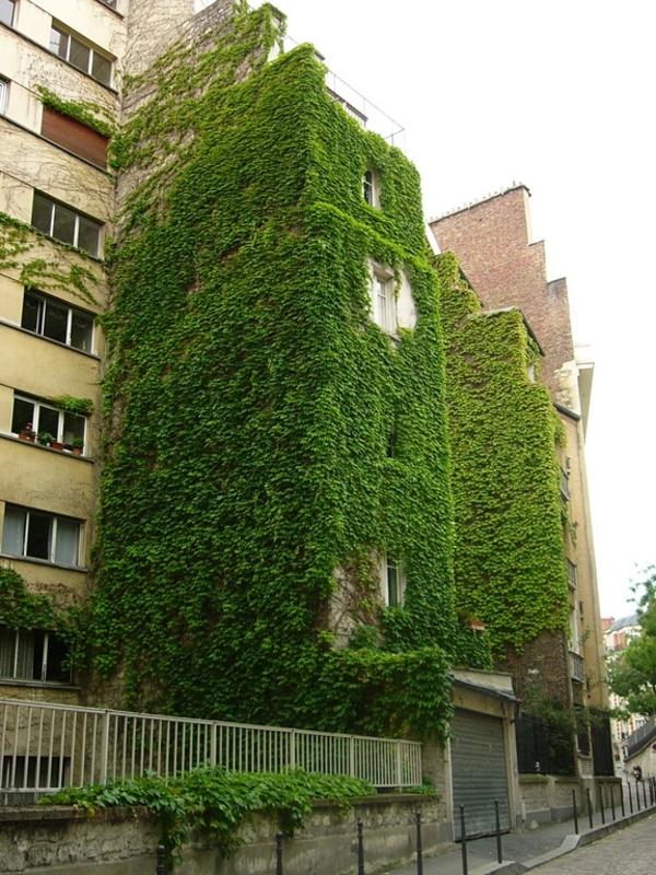 vertikale gärten efeufassade