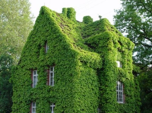 vertikale gärten ein verwunschenes haus