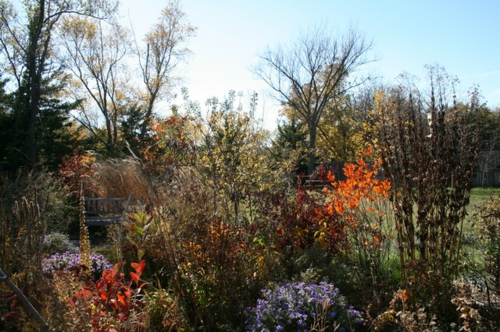 Blumenwiese aus Wildblumen im Garten anpflanzung blüten bunt