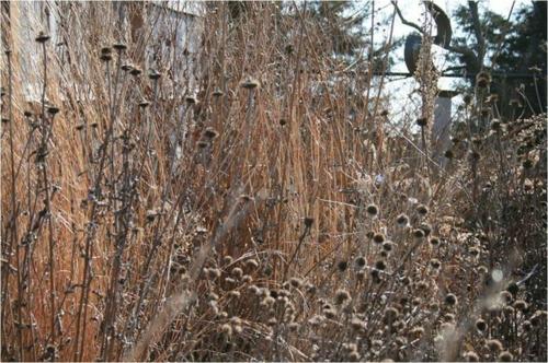 Blumenwiese Aus Wildblumen Im Garten Selber Anlegen Blumenwiese Anlegen Garten