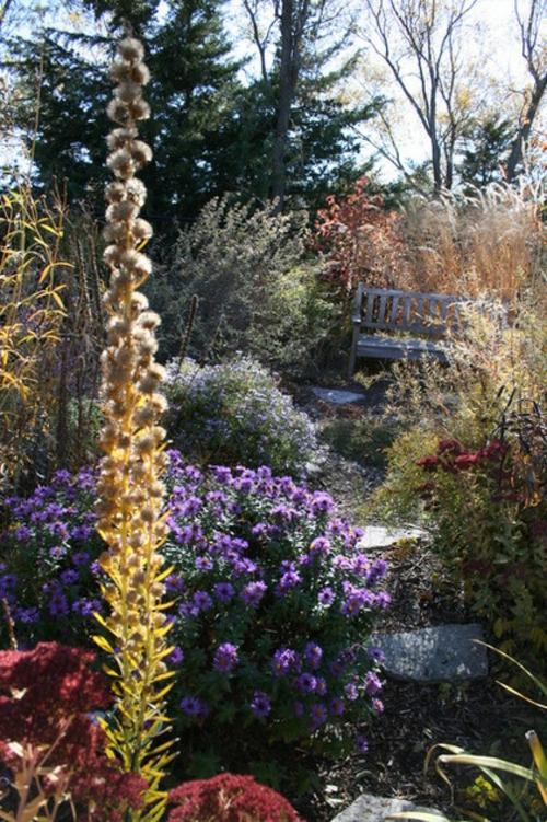 Blumenwiese aus Wildblumen im Garten anpflanzung sitzbank holz