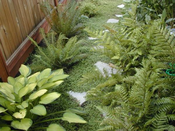 Bodendecker im Garten landschaftsbau immegrün design idee