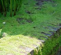 Bodendecker im Garten einsetzen – 6 wunderbare Wege