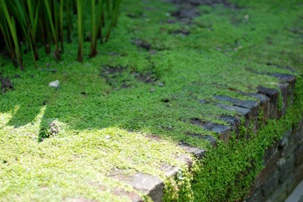 Bodendecker im Garten landschaftsbau immegrün moos haus