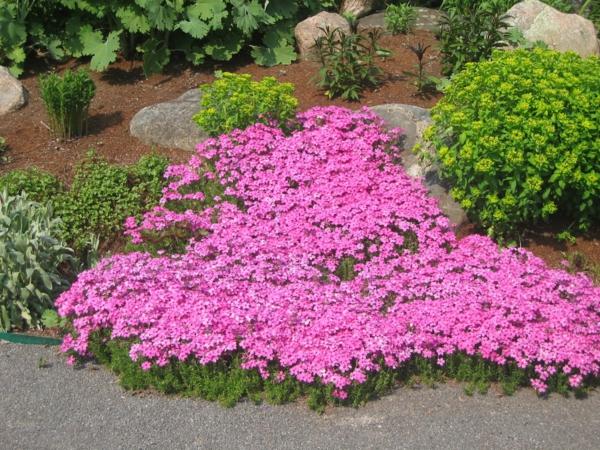 Bodendecker im Garten landschaftsbau rosa blüten steine landschaftbau