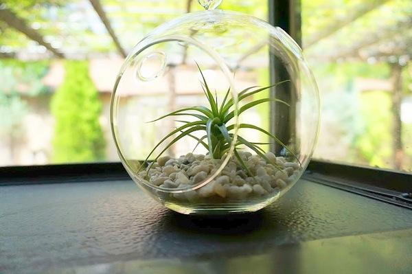 Den Garten mit Luftpflanzen gestalten urban glaskugel dekoration