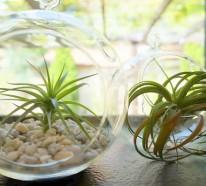 Den Garten mit Luftpflanzen gestalten