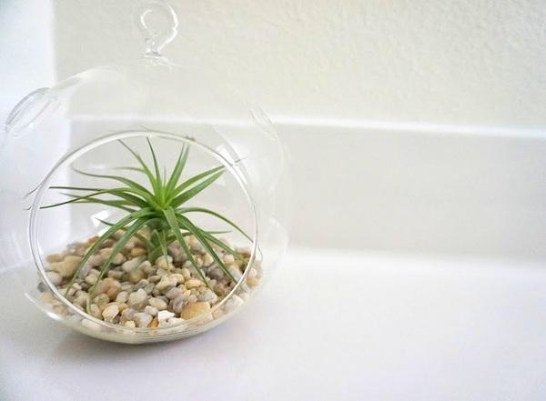 Den Garten mit Luftpflanzen gestalten urban glaskugel kieselsteine vielfalt