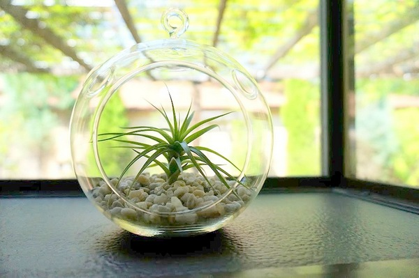 Den Garten mit Luftpflanzen gestalten urban glaskugel kieselsteine