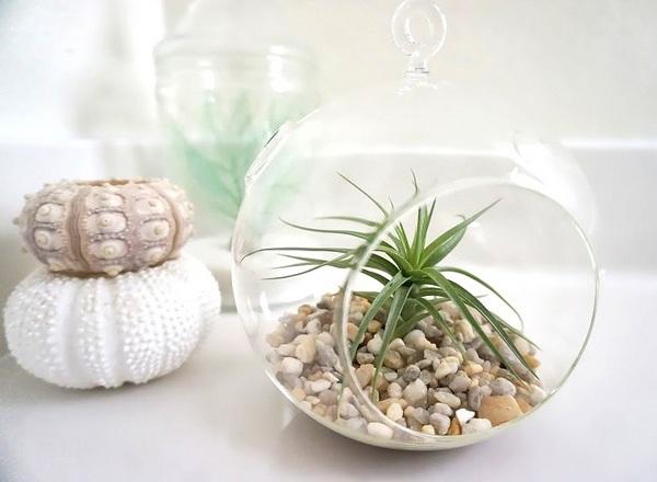 Den Garten mit Luftpflanzen gestalten urban glaskugel kombiniert