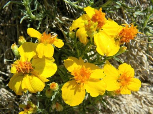Die Zinnie im Garten gelbe blüten gras blumen landschaft