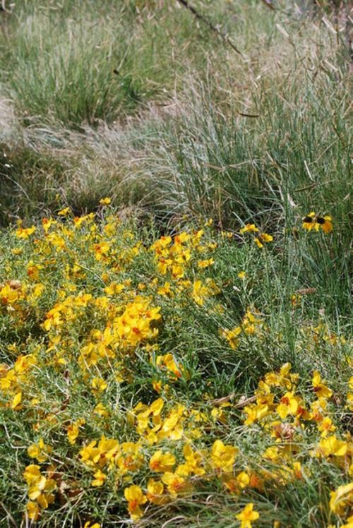Die Zinnie im Garten gelbe blüten grasfläche landschaft