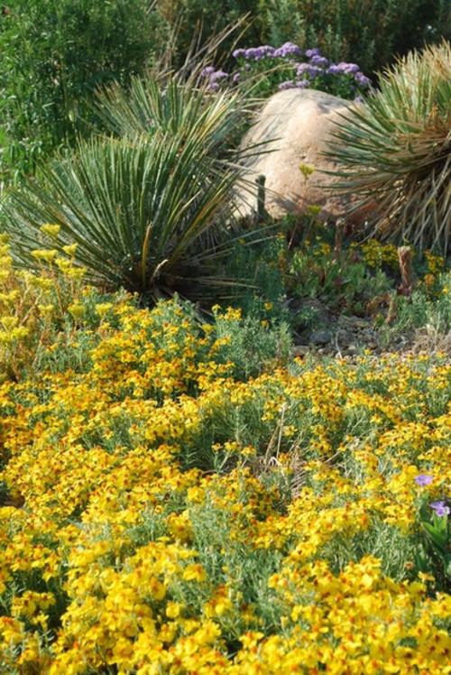 Die Zinnie im Garten gelbe blüten steine landschaft exotisch pflanzen