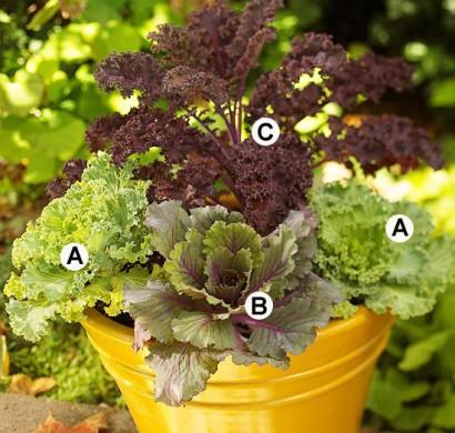 Gärtnern Im Herbst ? Den Garten Für Die Wintertagen Vorbereiten ... Gartnern Im Herbst Den Garten Fur Die Wintertagen Vorbereiten