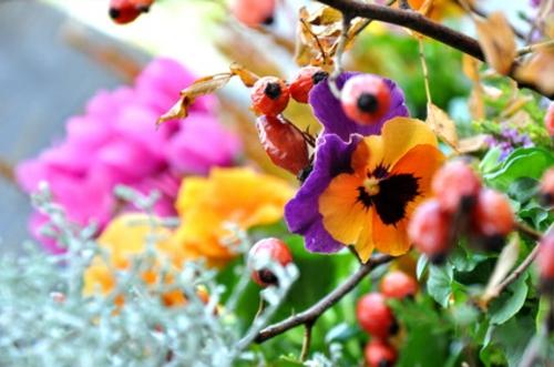 Herbstblüten hübsche  balkonpflanzen für den  herbst kalte jahreszeit