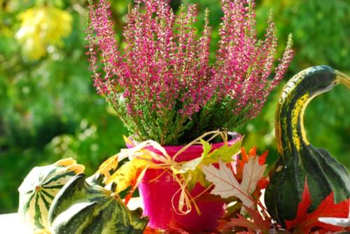 hübsche balkonpflanzen für die kalte jahreszeit kürbisse