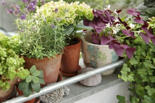 Balkonpflanzen für die kalte Jahreszeit  arten