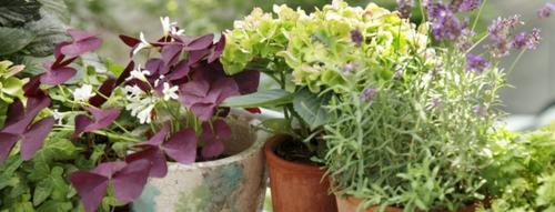 hübsche balkonpflanzen für die kalte jahreszeit