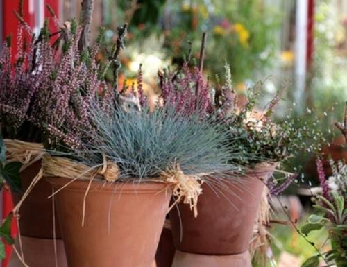 Garten Herbst balkonpflanzen blumentöpfe arten winterhart