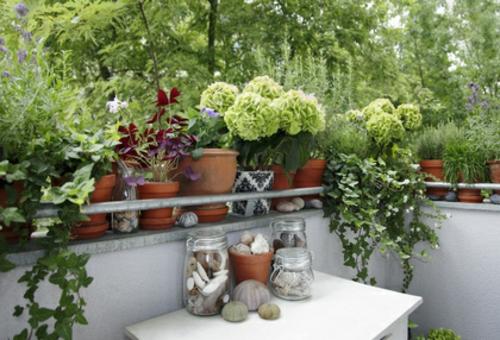 Balkonpflanzen für kalte jahreszeit herbst dekoration