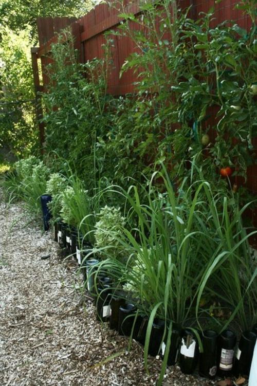 Heilpflanze wie Zitronengras im Garten anbauen tomaten