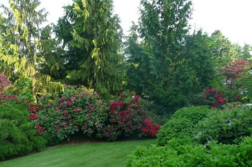 Origineller Sichtschutz im Garten landschaft grünfläche blüten rot