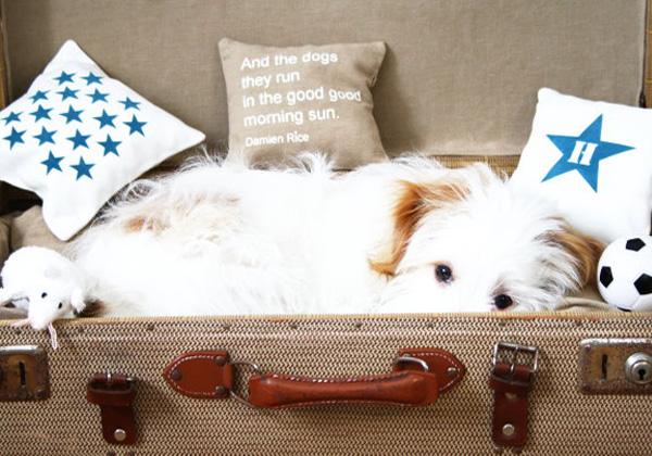 Trendy Möbel aus alten Koffern zum Selbermachen haustier hund