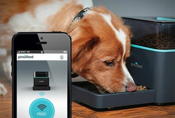 Das Haustier via Smartphone füttern