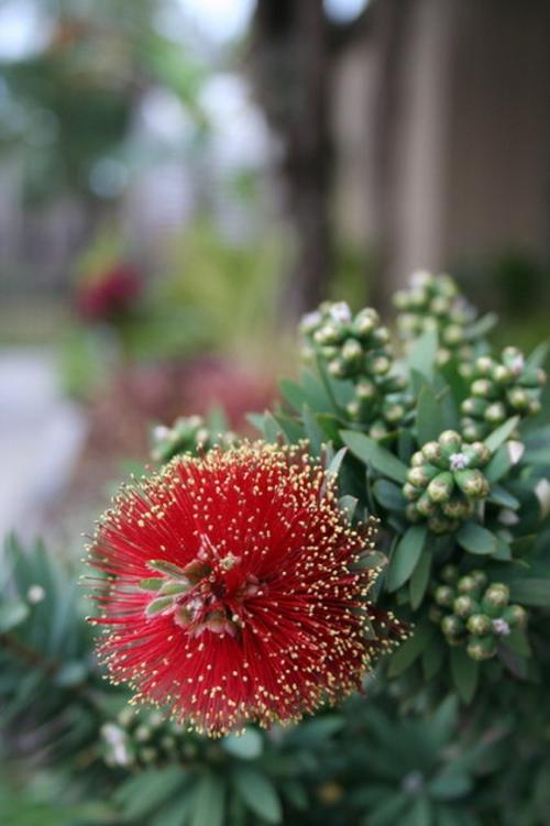 coole Design Pflanze blüten blätter gestalten idee originell
