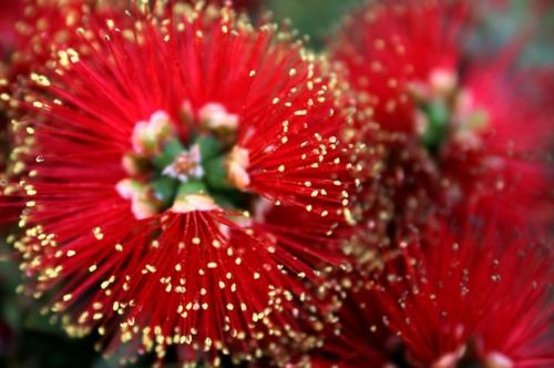 coole Design Pflanze blüten rot farben gestalten landschaft