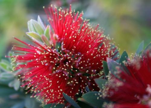 coole Design Pflanze blüten rot farben gestalten zylinder