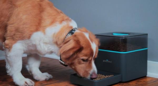 das haustier via smartphone füttern hund pintofeed mahlzeit