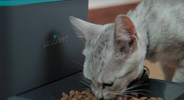 das haustier via smartphone füttern katze clever idee katze