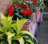 Dracaena richtig pflegen – Setzen Sie sich große Ziele mit dieser hohen afrikanischen Hauspflanze