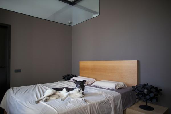 kreative wohnung mit fließendem design minimalistisches schlafzimmer mit hund