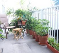Terrassengestaltung mit Pflanzen – wunderschöne Beispiele und Ratschläge für Sie
