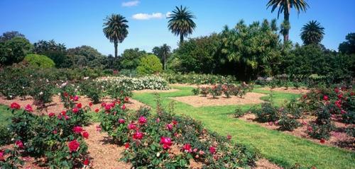 wunderschöne Landschaft auf der Landesgartenschau australien design rosa