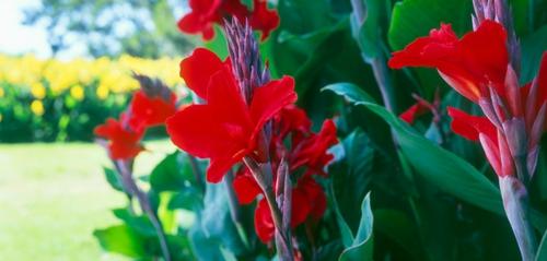 wunderschöne Landschaft auf der Landesgartenschau australien rot blumen