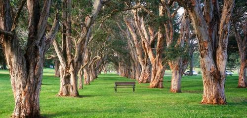 wunderschöne Landschaft auf der Landesgartenschau baum sitzbank
